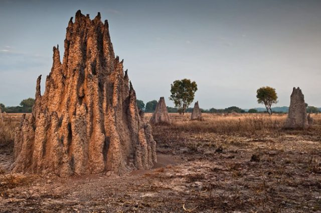 A-Brazilian-Forest-Harboring-200-Million-Termite-Mounds-Spotted-696x464